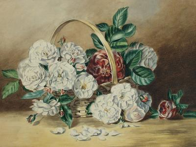 Image: Davis William, 'A basket of camelias', watercolour, early 19th century