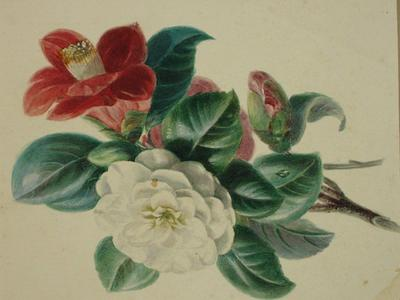 Image: Davis William, 'Flower study', watercolour, early 19th century