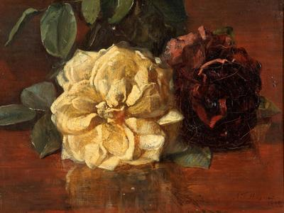 Image: Haynes A.F, 'Roses', oil on canvas, 1899