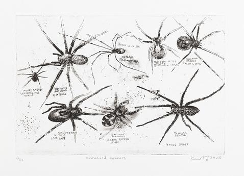 Household spiders. 2020
