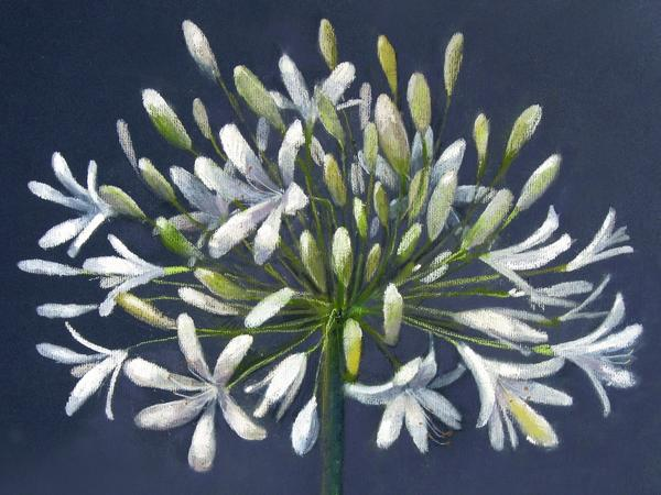 Image: Agapanthus (pastel) by Fay Shirley