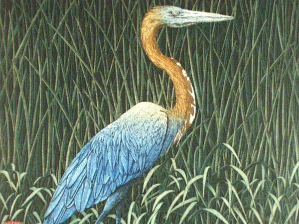 Image: Mark Milburn, Blue Heron